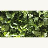 Αρωματικά φυτά